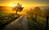 Idyllic rural landscape on a hill with a tree on a meadow at sunrise a path leads into the warm gold light poster