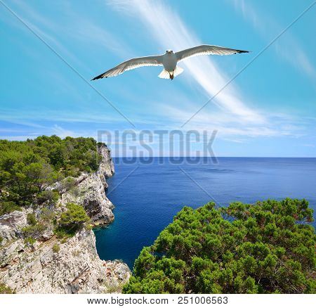 Seagull Over Cliffs In Telascica Nature Park, Dugi Otok Island In The Adriatic Sea. Croatia.