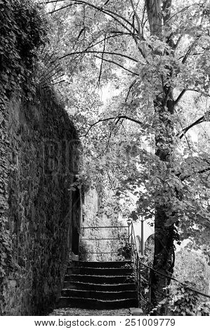 Tree Growing At An Ancient Stone Wall With Small Staircase.