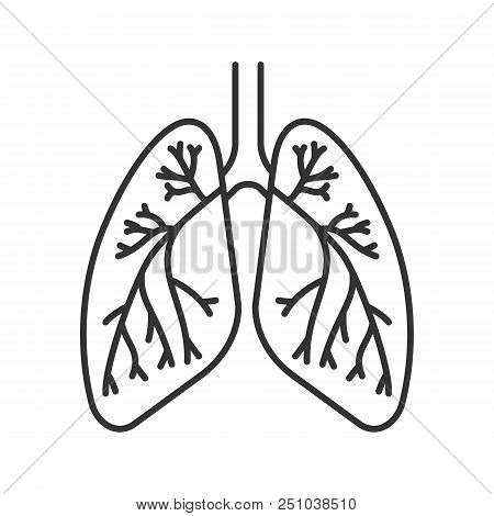 Respiratory System Images Illustrations Vectors Free