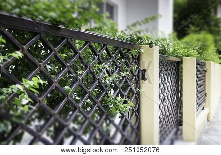 Green Leaves Plant Decorated In The Fence, Stock Photo