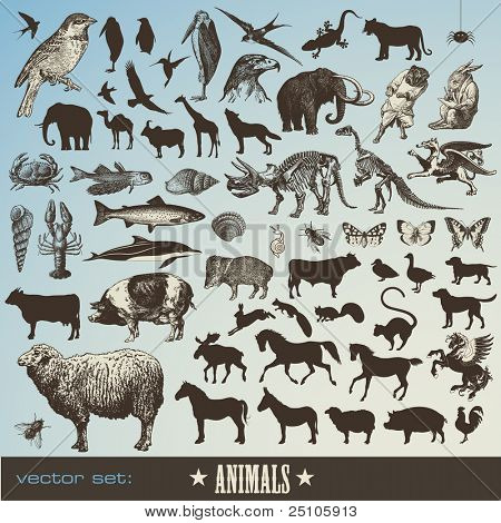 vector set: animals - collection of 60 detailed animal illustrations and animal silhouettes