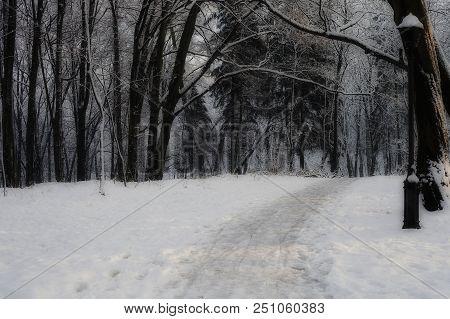 Winter Road In Frozen Woodland. Path Through Misty Night Forest. Footpath Between Dark Trees Silhoue