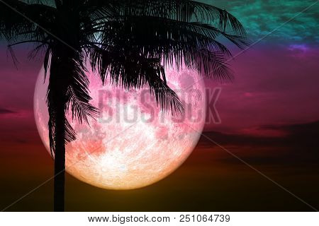 Full Pink Moon Back Silhouette Coconut Tree Stand On Sunset Sky