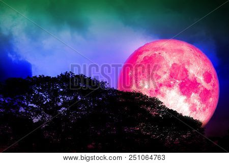 Full Pink Moon Back Silhouette Trees And Colorful Sky