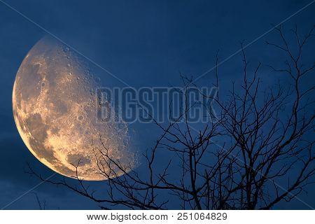 Half Blood Moon Back Silhouette Tree And Night Sky