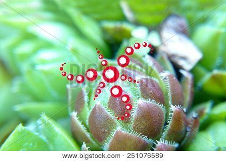 Geometric Red Pattern Prana Cactus, The Esoteric Phenomenon Of The Spirit Of Nature, Prana The Life