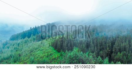 Fir Forest In The Mist In The Highlands Of Scotland
