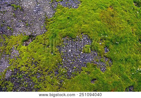 Green Moss On Asphalt. The Moss Grows On Asphalt In The Form Of A Contour Of The Map Of Europe.