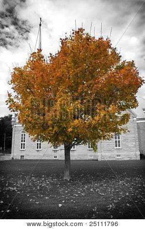 Autumn Tree And Church