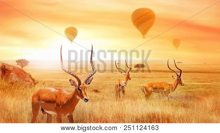 Group Of African Antelope In The African Savanna Against A Beautiful Sunset And Air Balloons. Africa