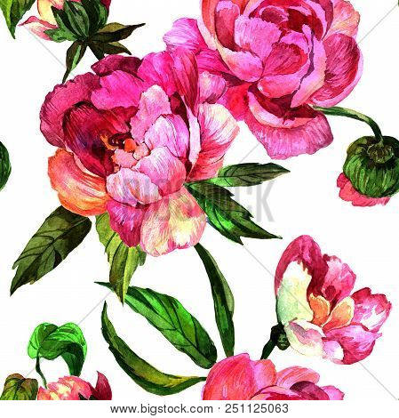 Watercolor Pink Peony Flower. Floral Botanical Flower. Seamless Background Pattern. Fabric Wallpaper