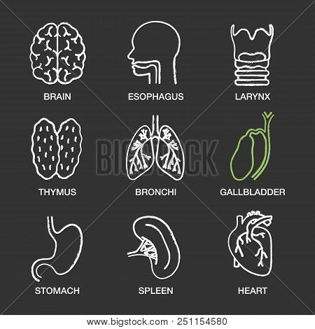 Human Internal Organs Chalk Icons Set. Brain, Esophagus, Larynx, Thymus, Bronchi, Gallbladder, Stoma