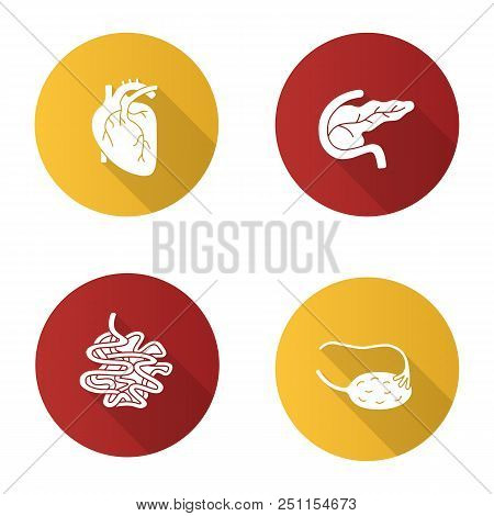 Internal Organs Flat Design Long Shadow Glyph Icons Set. Heart, Pancreas And Duodenum, Small Intesti