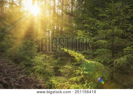 Sunlight In Green Forest At Sunrise. Landscape Of Summer Forest With Warm Sunbeams Through Trees. Na