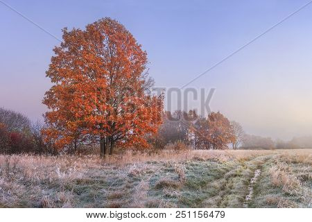 Autumn Landscape. Amazing Fall In November. Morning Autumnal Nature. Cold Meadow With Hoarfrost On G