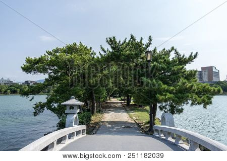 Pine Tree Forest In Ohori Park