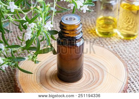 A Bottle Of Mountain Savory Essential Oil With Fresh Blooming Satureja Montana In The Background