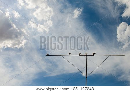 Pigeons On A Roost Against The Sky With Clouds