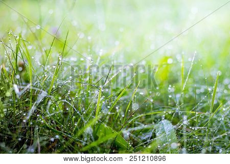 Morning Dew In The Woods On The Grass. Morning Freshness In The Field And On Meadows. Summer Morning