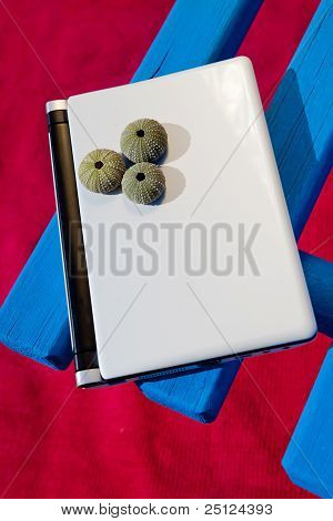 Laptop on a bench with sea urchin on top