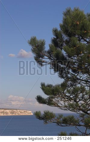 Conifer With Sea & Cliffs