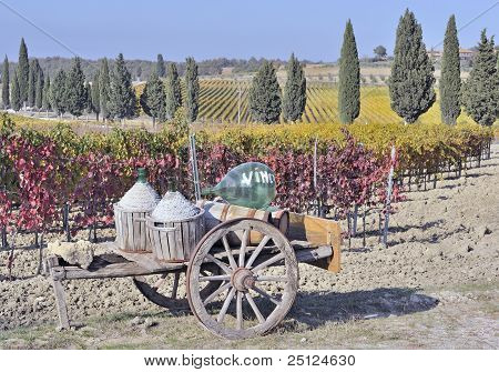 Tuscan vineyard in fall