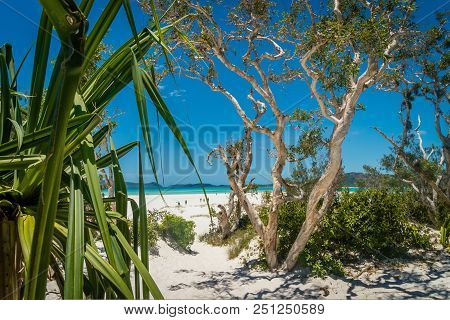 Whitehaven Heaven Paradise Beach In Australia In The Summer