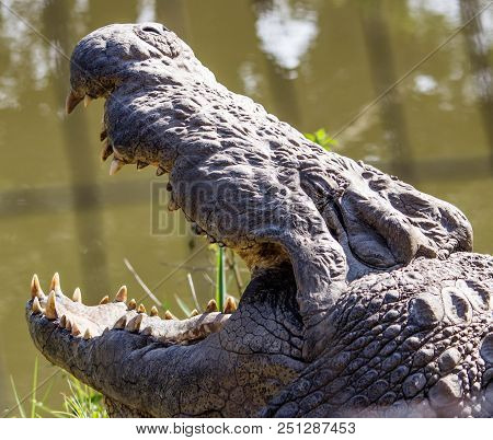 This is a scary crocodile name Henry poster