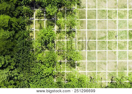 Rational Urban Landscape Design. Top View of Regular Net in the Green Park in Shenzhen, China. poster