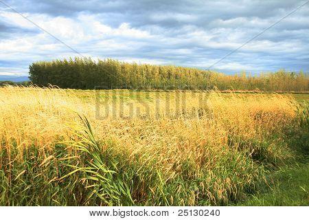 Farms of Bellingham