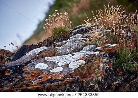 Close Up Of Rocks At The Cliff In Co. Wexford South-east Ireland
