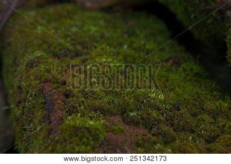 Green Moss Background Beautiful In Nature.closeup Of Moss On Brick Wall.