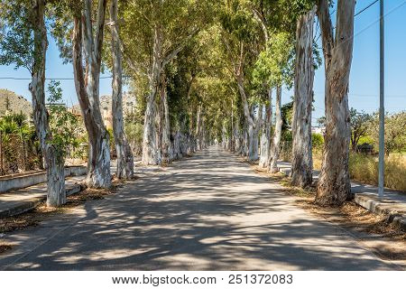Long Straight Road With Enormous Eucalyptus Trees In Kolymbia. Rhodes Island, Greece