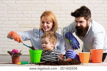 Family Plant Flowers In Pot. Child With Parents Cares For Plants Together. Little Boy With Mother, F