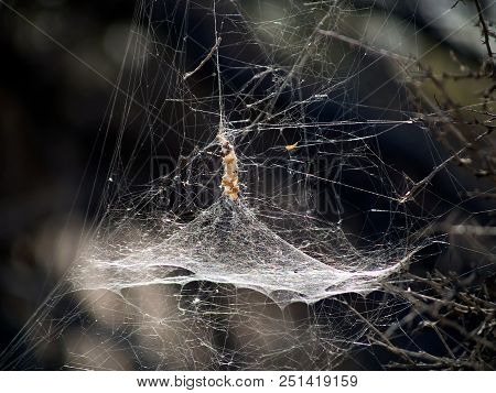 A spider web with a conical center where the spider would hide awaiting insect prey to be snared. poster