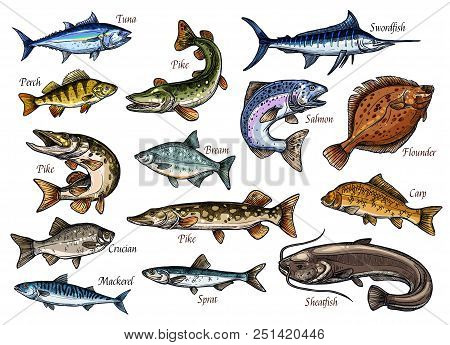 Fish Sketches Of Sea, Ocean And River Animal For Seafood And Fishing Sport Design. Salmon, Tuna And