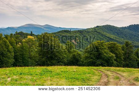 Country Road Down The Hill In To The Forest. Beautiful Scenery Of Carpathian Nature. High Mountain R