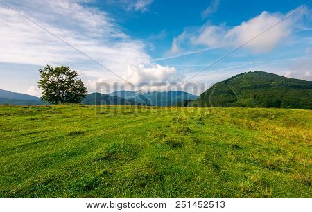 Grassy Meadow In Mountains. Tree On The Edge Of A Hill. Wonderful Weather Condition In Early Autumn.
