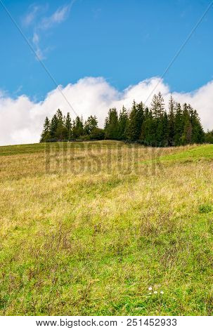 Spruce Woodlot On Top Of A Hill. Hillside With Weathered Grass In Early Autumn. Massive Cloud Behind
