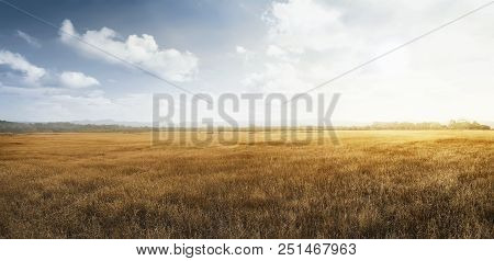 Landscape View Of Dry Savanna With Blue Sky Background