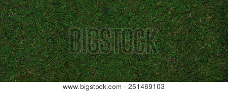 Closeup of green moss background or texture