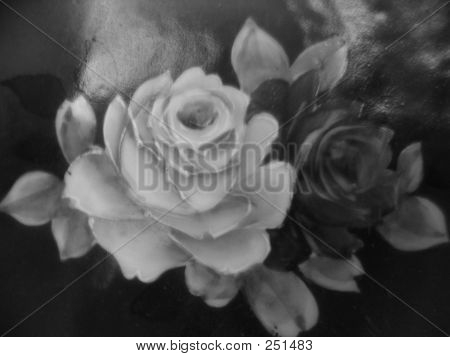 Soft Roses In Greyscale