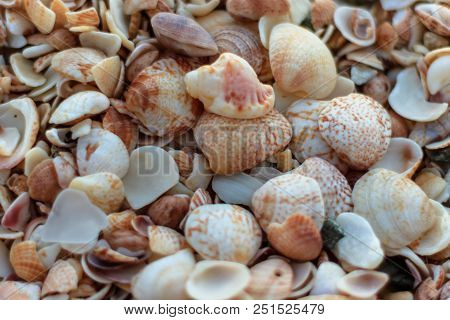 Travel Photo In St. Barths, Caribbean.  Close-up Photo Of A Lot Of Shells On Shell Beach In Gustavia