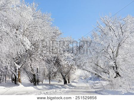Winter Scenery, Snow Nature And Winter Weather