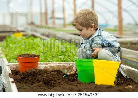 Gardener In Polytunnel. Gardener Polytunnel Greenhouse. Small Boy Gardener Working In Polytunnel Ora