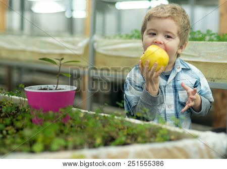 Vitamin Food. Grow Vitamin In Food. Small Boy Eating Food With Vitamin. Vitamin Food Concept