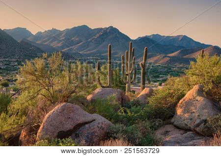 Saguaro Cactus Grow On Pinnacle Peak Which Is A Desert Hiking Park In Scottsdale Arizona.