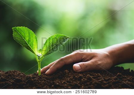 Plant Seedlings In Nature Plant A Tree Natural Background Plant Coffee Seedlings In Nature Green Fre