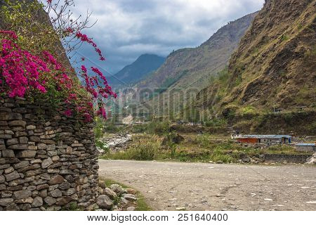Bright Pink Flowers On A Background Of Sky And Mountains, Nepal.